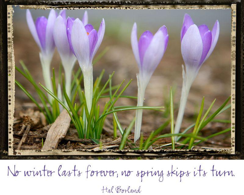 Springwcs
