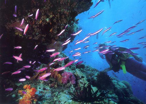Great Barrier Reef - an inspiration photo