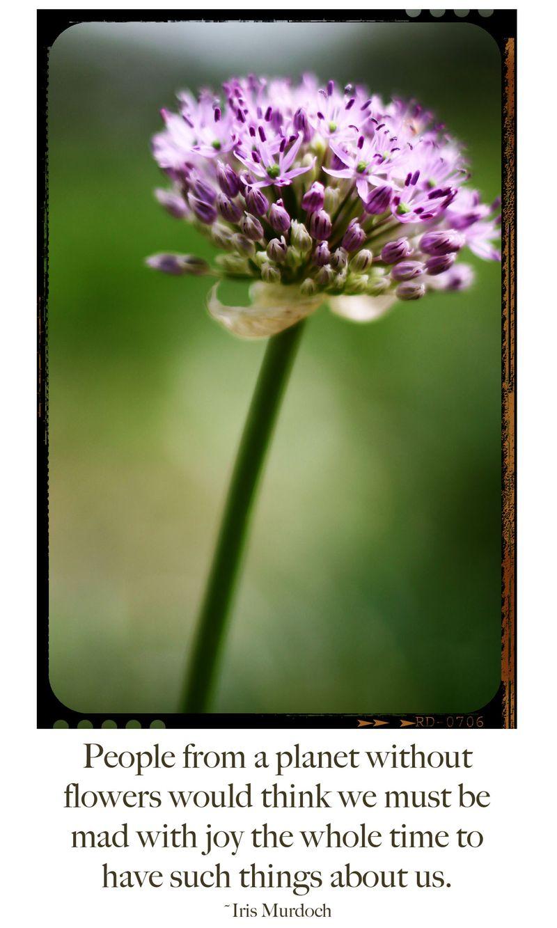 Adamsmithflower