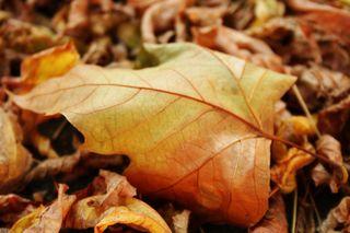 Francine Clouden Leaf