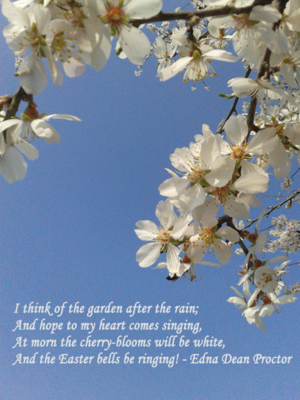 Sunday Photo & Words by Francine Clouden April 20th