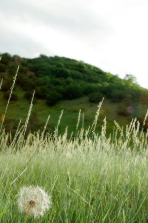 A sorensen background photo scenery details